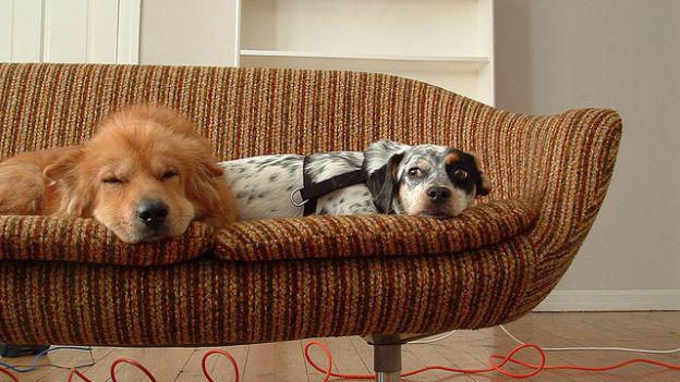 Animali in casa: come riservare uno spazio adatto a loro
