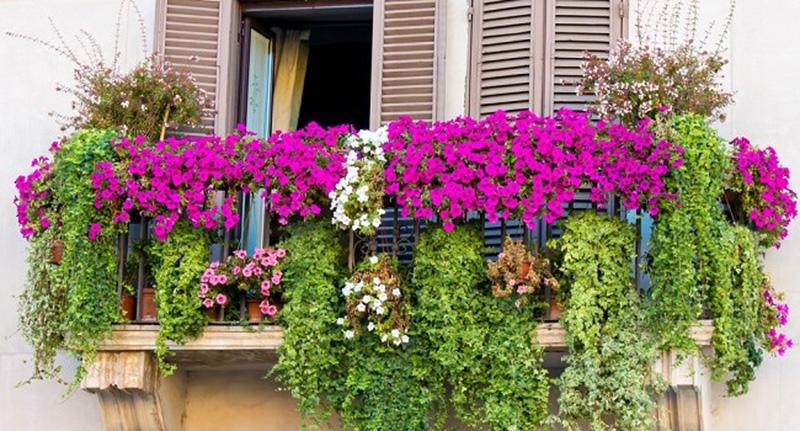 Quali piante si possono coltivare sul balcone?