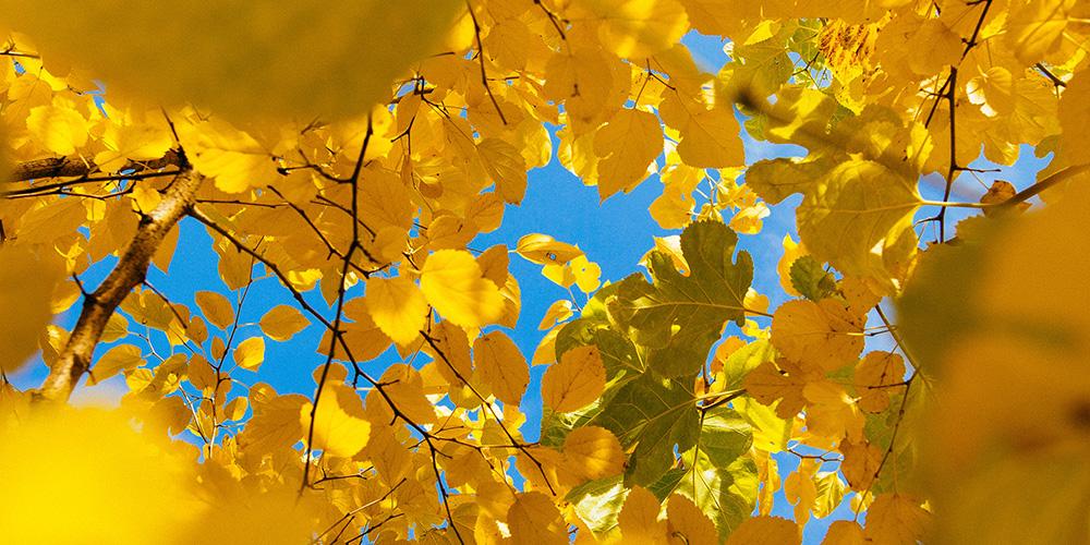 Vivere lontano dalla metropoli: in Brianza, alla ricerca della fusione con la natura